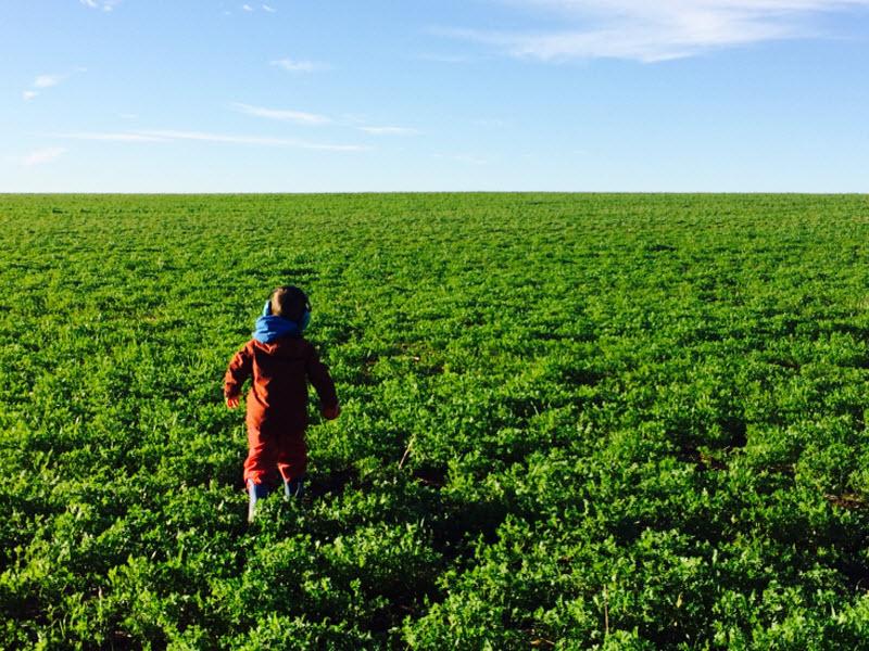 Rosevale - A child walking into a lentil farm